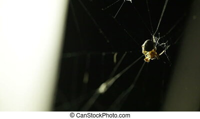 Spider hunting - On a background a streetlight on spider web