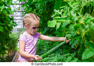 Cute little girl collects crop cucumbers in the greenhouse -...