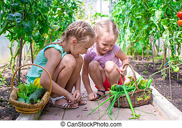 Cute little girls collect crop cucumbers in the greenhouse -...