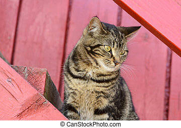 Cute cat sitting on outdoor stairs and looking at something...