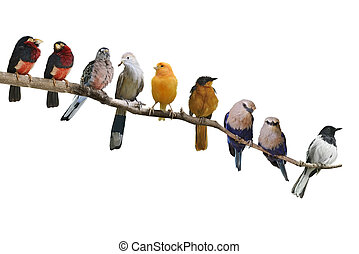 Birds Perching - Perching Birds Isolated On White Background