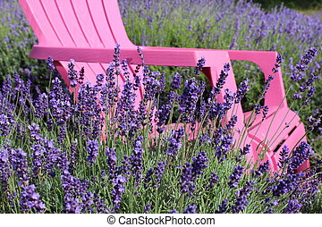 Pink Chair in Purple Lavender Field - Colourful photo of a...