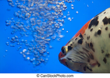 fish - the fish with air bubbles