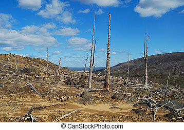 The dead trees - The Russia The Kola peninsula Consequences...