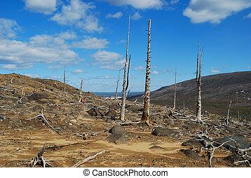 The dead trees - The Russia. The Kola peninsula....