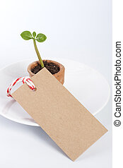 Seedling with paper tag