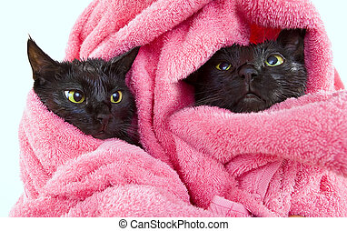 Two Cute black soggy cats after a bath drying off with a...