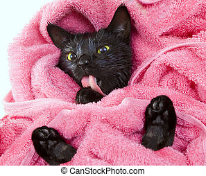 Cute black soggy cat licking after a bath, funny little...