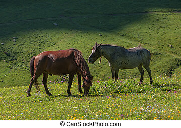 mountain - two horse in high mountains