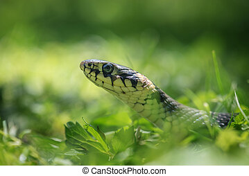 snake portrait on green grass background
