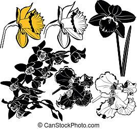 orchid narcissus irises