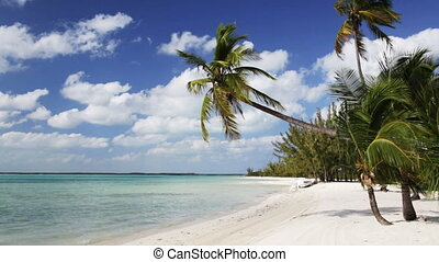 tropical beach with palm trees and boat - vacation, nature,...