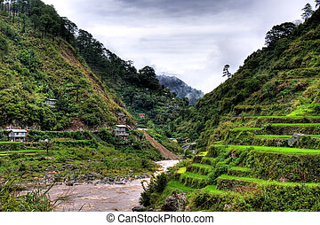 Rice terraces - A beautiful view of a Philippine hillside...