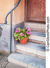 Potted plant front of house - Image of a potted plant at the...