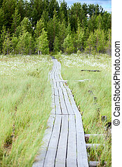 Wooden pathway between swamp to evergreen forest