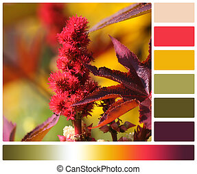 Palmcrist Flower. Palette With Complimentary Colour Swatches