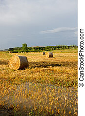 Hay field in Tuscany