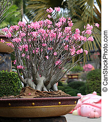 flowering bonsai Tree - flowering unusual beautiful bonsai...