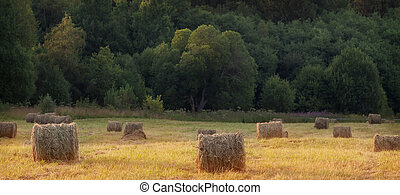 Hay bales in the summer meadow