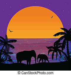 Elephants on sunset, near ocean - Elephants in beautiful...