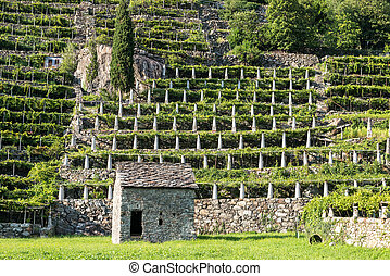 Stone house and vineyards, Pont Saint Martin Italy - Stone...