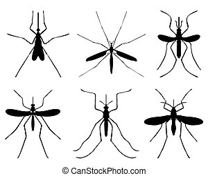 mosquito - Black silhouettes of mosquito, vector