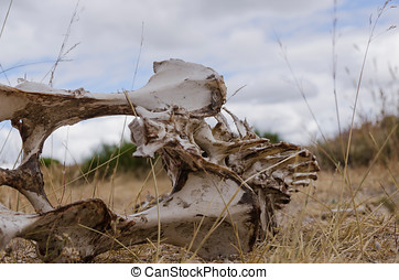 animal skeleton - Bones with rotten meat Skeleton of a...