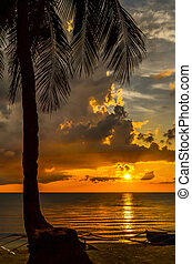 Beach Coconut Tree at Sunset