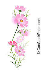 flower - illustration drawing of pink daisy on the white...