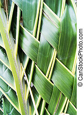 Weave of Palm Leaf in Texture