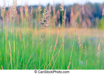 beautiful field with blooming grass