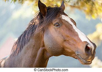purebred, correndo, cavalo