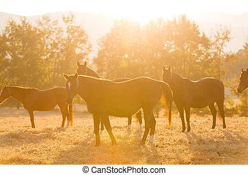 horse herd on ranch