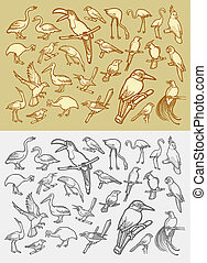 Bird icons sketch - Drawing and vintage style, bird icons...