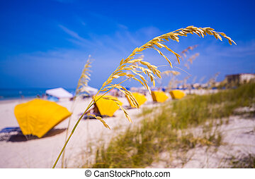 Madiera Beach and sea oats in Florida - Sea Oats frame the...