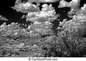 Sonora Desert - The Sonora desert in central Arizona USA