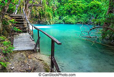 Wood bridge beside swamp