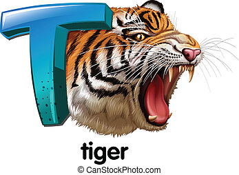 A roaring tiger - Illustration of a roaring tiger on a white...