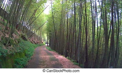 Driving through the bamboo forest at summer time