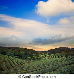 Tea plantation valley at dramatic pink sunset sky in Taiwan...