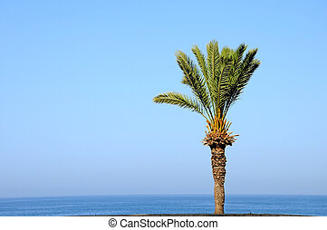 palm tree over sea water 2 - palm tree over sea water and...