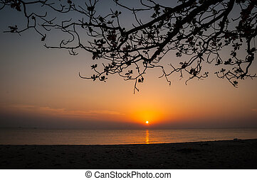 Silhouette of tree on the beach