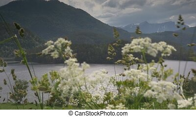 1080p, View Through Weed On Fjord, - Nature Of Norway,...