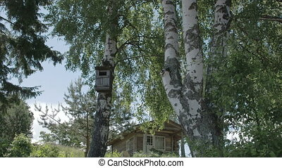 Trees around the small house in Kasmu Estonia FS700 Odyssey 7Q