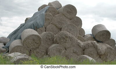 The rolls of hay balls in the field FS700 Odyssey 7Q - The...