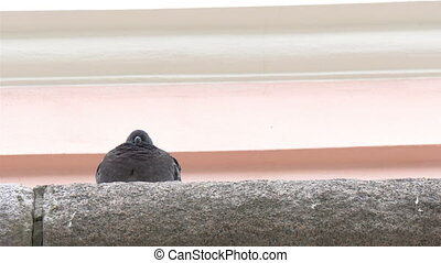 A barn swallow bird facing backward on top of the building...