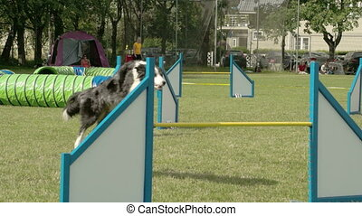A big dog doing a long jump on the stick on a dog show FS700...