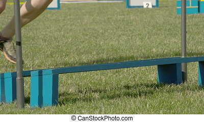 A small dog jumping over the obstacle with the trainor also...