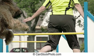 A big furr dog shows agility over the obstacle - A big furr...