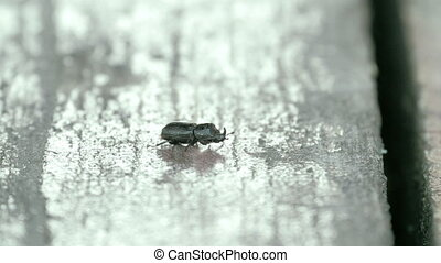 A black beetle crawling on the wall